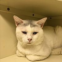 Adopt A Pet :: Larry - Salem, NH