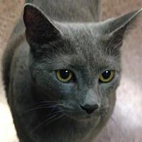 Adopt A Pet :: Iggy - Fairport, NY