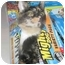 Photo 4 - Domestic Shorthair Cat for adoption in Xenia, Ohio - Lilly
