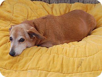 Dachshund Mix Dog for adoption in Creston, California - Brownie