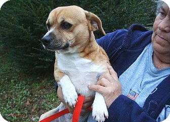 Corgi Mix Dog for adoption in Crump, Tennessee - George