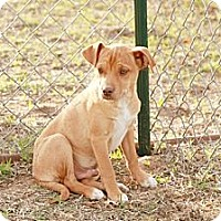 Adopt A Pet :: Trooper - Ranger, TX