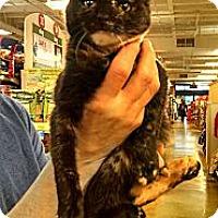 Adopt A Pet :: Alicia - Cranford/Rartian, NJ