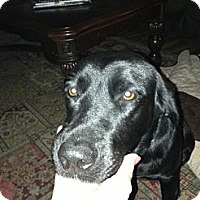Adopt A Pet :: Bridgette - Kingwood, TX