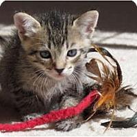 Adopt A Pet :: Bacardi - La Jolla, CA