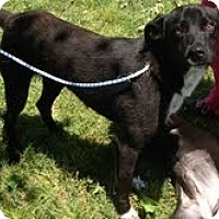Adopt A Pet :: Midnight - Marietta, GA