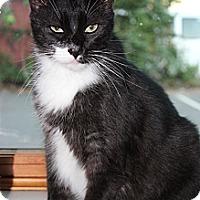 Adopt A Pet :: Panchito - Secaucus, NJ