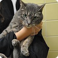 Adopt A Pet :: Pawla - Rockaway, NJ