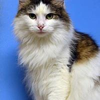 Adopt A Pet :: Estess 14184 - Atlanta, GA