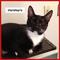 Adopt A Pet :: Hershey's - Miami, FL