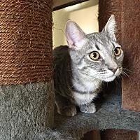 Adopt A Pet :: Quaid - Santa Ana, CA