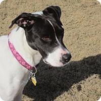 Adopt A Pet :: Sarah - Menlo Park, CA