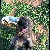 Adopt A Pet :: Freeway - Charlotte, NC