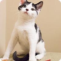 Adopt A Pet :: Margot - Chicago, IL