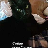 Adopt A Pet :: A Sleek Set: TABOO (& Tarot) - Monrovia, CA