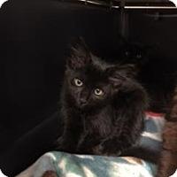 Adopt A Pet :: Rucca - Gulfport, MS