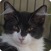 Adopt A Pet :: Doris Day - Brooklyn, NY