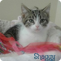 Adopt A Pet :: Shaggy - Harrisville, WV