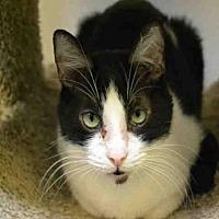 Adopt A Pet :: ED - Rancho Cucamonga, CA