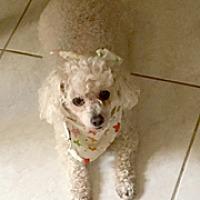Adopt A Pet :: BUCKLEY - Melbourne, FL