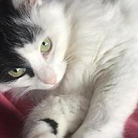 Adopt A Pet :: Ninja - Half Moon Bay, CA