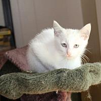 Adopt A Pet :: Virginia Street - Huntsville, AL