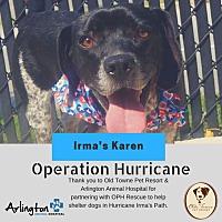 Adopt A Pet :: Irma's Karen - Alexandria, VA