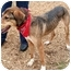 Photo 2 - Greyhound/German Shepherd Dog Mix Dog for adoption in Cincinnati, Ohio - Noodle