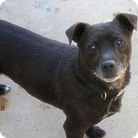 Adopt A Pet :: Tippy - Staley, NC