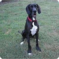 Adopt A Pet :: Leece - Oak Ridge, TN