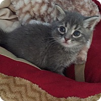Adopt A Pet :: Sam - Union, KY