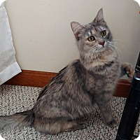 Adopt A Pet :: Sophie - N. Billerica, MA