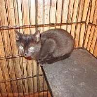 Adopt A Pet :: Smudge - Delmont, PA