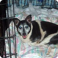 Adopt A Pet :: Rosey - Homosassa, FL