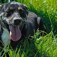 Adopt A Pet :: Kate - Aurora, MO