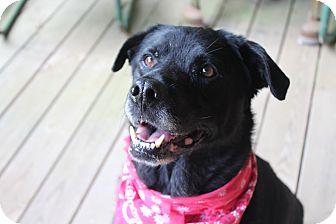 Labrador Retriever Mix Dog for adoption in Roswell, Georgia - Cassie