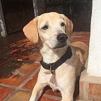 Adopt A Pet :: Esme - Toronto, ON