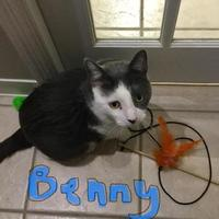 Adopt A Pet :: Benny - Hastings, MN