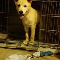 Adopt A Pet :: William - Adoption Pending - Oakton, VA