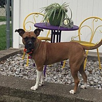 Adopt A Pet :: Luisa - Mt. Vernon, IN
