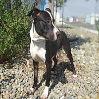 Adopt A Pet :: OREO - Fairfield, CA