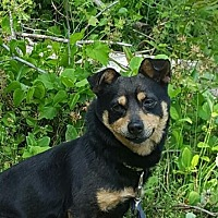 Adopt A Pet :: Dexter - Walton County, GA