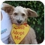 Photo 4 - Wheaten Terrier Mix Dog for adoption in Coral Springs, Florida - CoCo