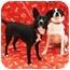 Photo 3 - Schipperke Mix Dog for adoption in Sugar Land, Texas - Bonnie