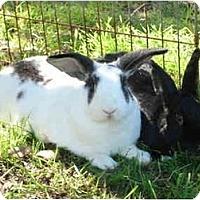 Adopt A Pet :: Lucinda - Santee, CA