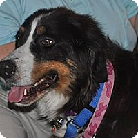 Adopt A Pet :: Peggy - Westtown, PA