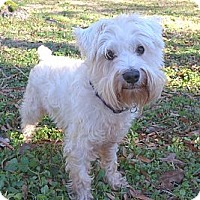 Adopt A Pet :: Whitey - Mocksville, NC