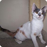 Adopt A Pet :: K-Traci2-Cappuccino - Colorado Springs, CO