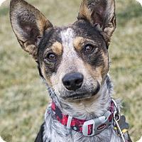 Adopt A Pet :: Wyatt - Delano, MN