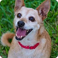 Adopt A Pet :: Moose - Miami, FL